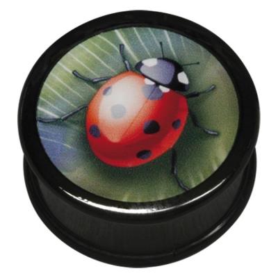 ilustratie Ladybird
